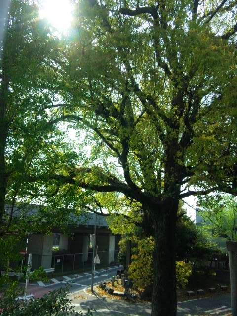 竜陽園 新緑の木々